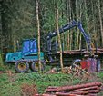 Sensitive conifer felling and forwarder at Site 1. Clonbur